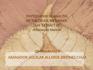 ARTOCARPUS BLANCOI GROUP1.pptx