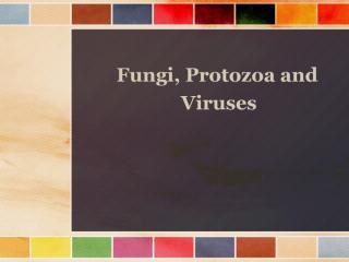 main fungi n pro.pdf