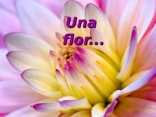 La_Flor.pps